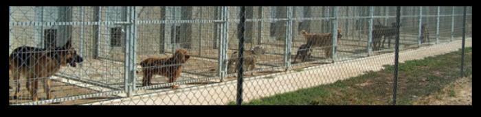 Un juez de Zaragoza no considera maltrato la congelación de mascotas