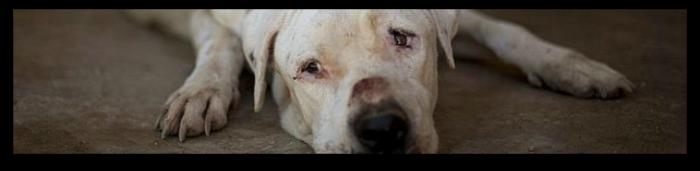 Los Ángeles prohíbe a todas sus tiendas de animales la venta de perros, gatos y conejos